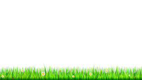 Green, natural grass border with white daisies, camomile flower and small red ladybug on white background. Template for. Your design or creativity Stock Image