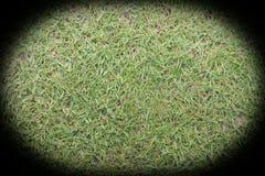 Green natural grass Royalty Free Stock Photo