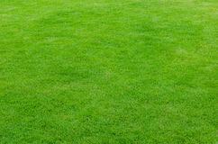 Green natural grass Stock Image
