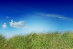 Green and natural landscape Royalty Free Stock Photo