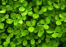 Green Natural Leaves Background