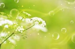 Green Natural Mood Stock Photos