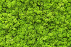 Green natural texture. Green natural close-up texture, macro Royalty Free Stock Image