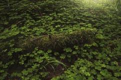 Green natural vegetation background. Lush vegetation on forest floor in the summer stock image
