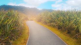 Green natural view and the road to success. stock photo