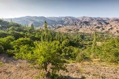green nature горы заказа на заднем плане индюк стоковая фотография
