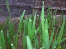 green nature Стоковые Фото