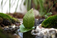 Green nature Royalty Free Stock Image