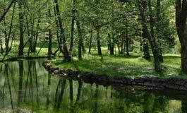 green nature stock photo