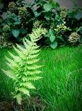 green nature Стоковое Изображение RF