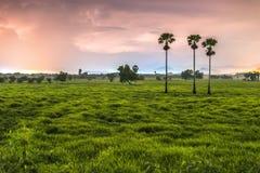 green nature Стоковое фото RF