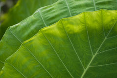 Green Nature. Stock Images