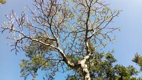green nature Стоковая Фотография RF