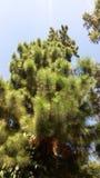 green nature Стоковые Фотографии RF