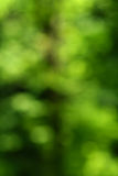 Green nature abstract background Stock Photos