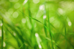 Green nature abstract background Royalty Free Stock Photo