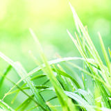 Green Nature abstract background. Fresh grass over blurred backd Stock Image