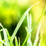 Green Nature abstract background. Fresh grass over blurred backd Royalty Free Stock Photo