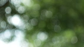 Green nature abstract background from leaf wind blows in forest ,green bokeh out of focus background from nature forest stock video footage