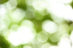 Green nature Stock Image