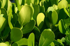 Green Nature Background Royalty Free Stock Photo