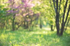 Green nature background with beautiful bokeh Stock Images