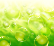 Green Nature Background Bubbles. A green natural abstract background with plants in the distance blurred and bubbles floating in various sizes Stock Photos