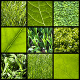 Green nature background - collage Royalty Free Stock Images
