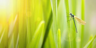 Green nature background with dragonfly Stock Images