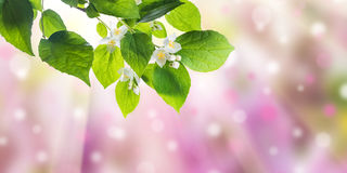 Green nature background. With flowers on branch Royalty Free Stock Images