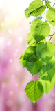 Green nature background Royalty Free Stock Image