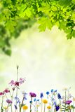 Nature background with flowers and leaves royalty free stock image