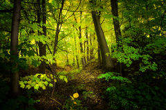 Green nature background on forest royalty free stock photo
