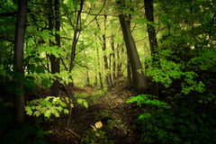 Green nature background royalty free stock photography