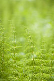 Green Nature Background Stock Image