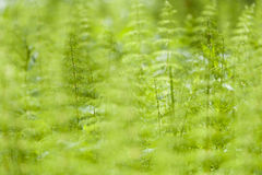 Green Nature Background. Nature background image from Finland Stock Image