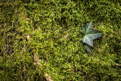 Green nature background Royalty Free Stock Images