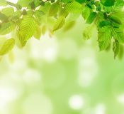 Green nature background Stock Photos