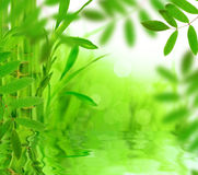 Green nature background Stock Images