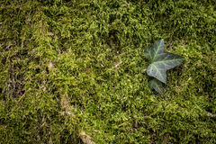 Green nature background Royalty Free Stock Photos