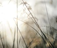 Green nature background with sky, sun,grass Royalty Free Stock Photography