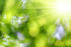 Green nature background Stock Photography