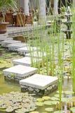 Green Nature in Bali Stock Photo