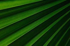 Green nature blackground Stock Images