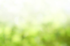 Green nature blurred background Stock Photography