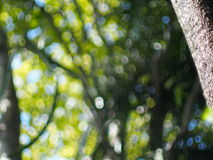 Green nature bokeh backdrop or background Stock Photo