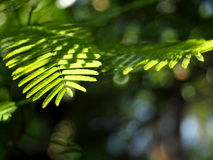 Green nature bokeh backdrop or background Stock Images