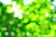 Green nature bokeh background Royalty Free Stock Photography