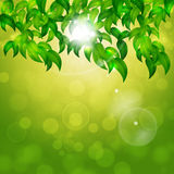 Green Nature Bright Background Royalty Free Stock Photos