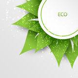 Green nature eco background. Green and white nature eco background vector illustration